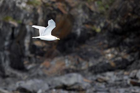 Bird01_450
